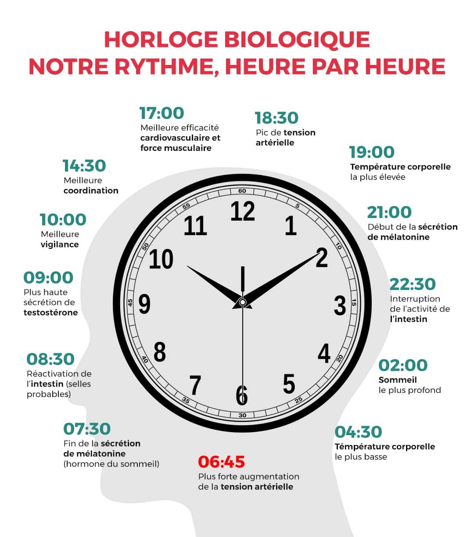 Horloge biologique, notre rythme heure par heure